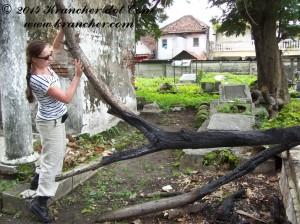 Ish tilt een boom, Peneleh Surabaya